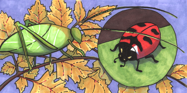 katydid-ladybug