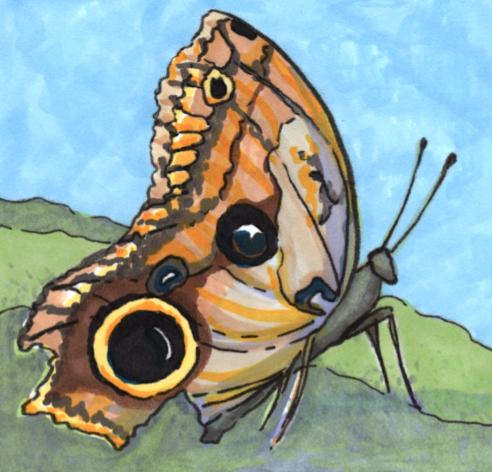 owl-moth
