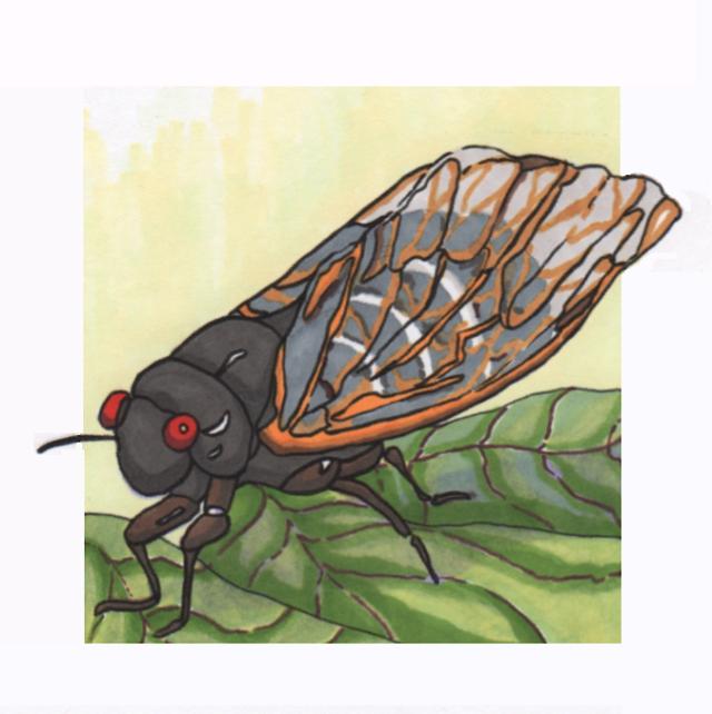 seventeen-year-cicada