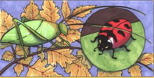Katydid and Ladybug