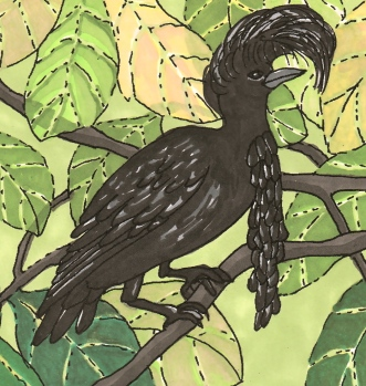 umbrellabird-revised