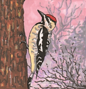 yellow-bellied_sapsucker