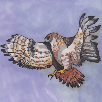 zonetail-hawk